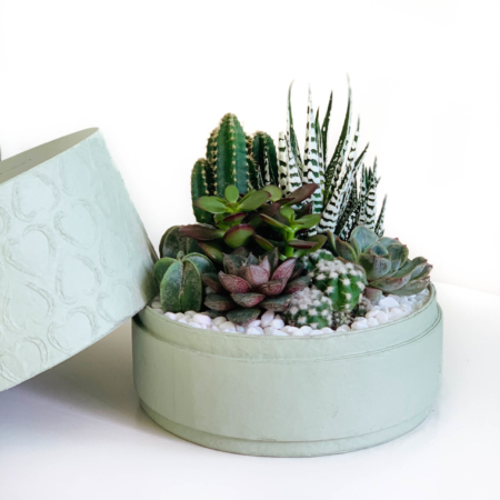 Mix of succulents in a medium mint green box