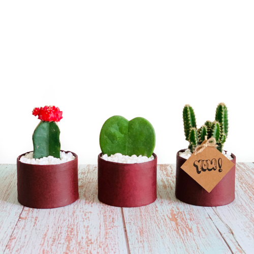 small succulents in red planters