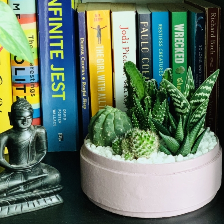 Midi Succulent mix in a dust pink handmade pot, midi jungle cacti mix. Biodegradable and recycled pot. Long-lasting and sustainable plant gift.