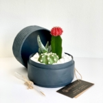 Mini Cacti mix in a charcoal blue handmade pot, mini succulent with a free gift card/personalised message. Biodegradable and recycled pot. Long-lasting and sustainable plant gift.