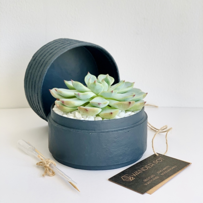 Mini Echeveria in a charcoal blue handmade pot, cute succulent with personalised gift card. Biodegradable and recycled pot. Long-lasting and memorable sustainable plant gift.