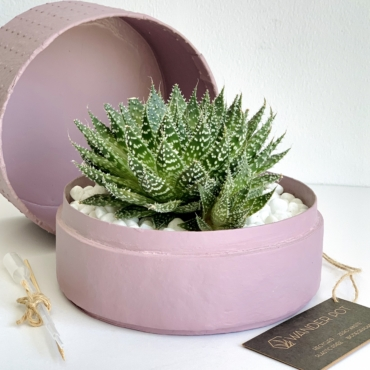 Midi Lace Aloe in a pink handmade pot. Biodegradable and recycled pot. Long-lasting and gorgeous sustainable plant gift.