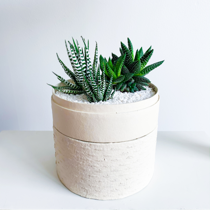 Midi Succulent mix in a warm white handmade pot, midi jungle cacti mix. Biodegradable and recycled pot. Long-lasting and sustainable plant gift.