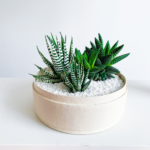Landscape View of Midi Succulent mix in a warm white handmade pot, midi jungle cacti mix. Biodegradable and recycled pot. Long-lasting and sustainable plant gift.