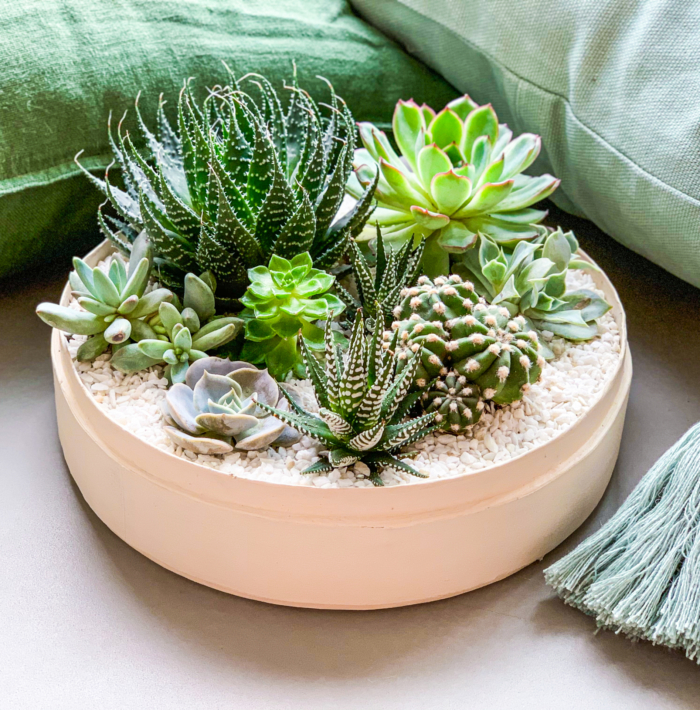 Lush Succulent mix in a warm white handmade pot as centrepiece with green cushions, cacti mix. Biodegradable and Recycled Pot. Long-lasting and sustainable plant gift.