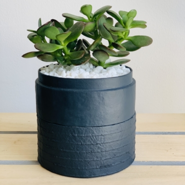Mini Jade in a charcoal blue handmade pot, mini succulent. Biodegradable and recycled pot. Long-lasting and sustainable plant gift.