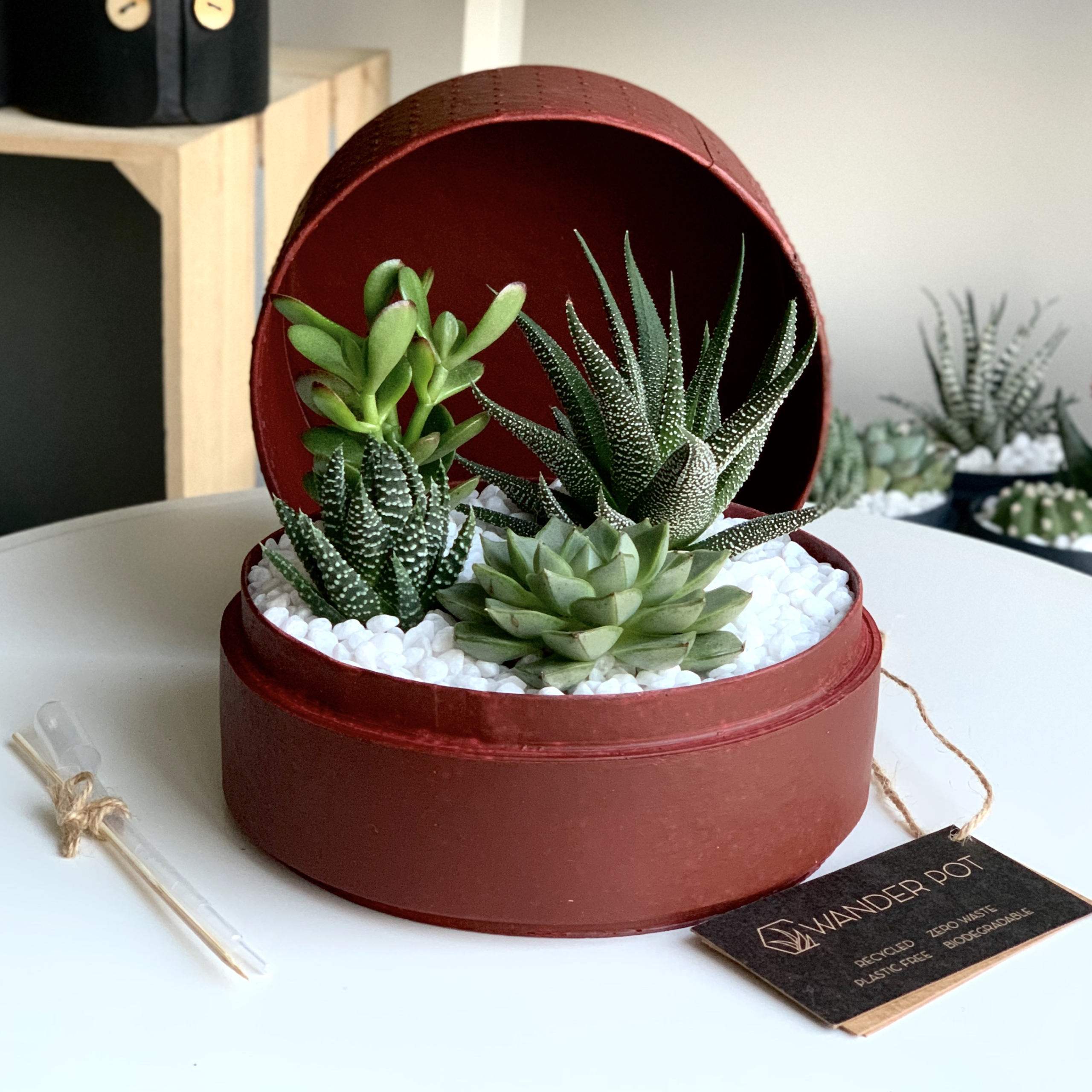 Succulent mix in a red handmade pot. Biodegradable and recycled pot. Long-lasting and gorgeous sustainable plant gift.