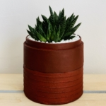Mini Haworthia in a white handmade pot. Biodegradable and recycled pot. Long-lasting and sustainable plant gift.