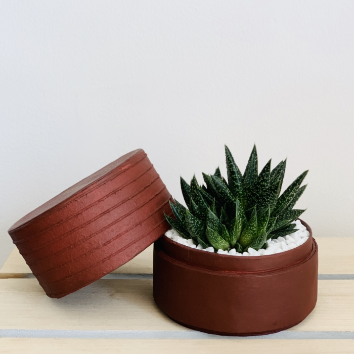 Mini Haworthia in a burgundy handmade pot. Biodegradable and recycled pot. Long-lasting and sustainable plant gift.