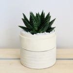Mini Haworthia in a white handmade pot with the lid as a saucer. Biodegradable and recycled pot. Long-lasting and sustainable plant gift.