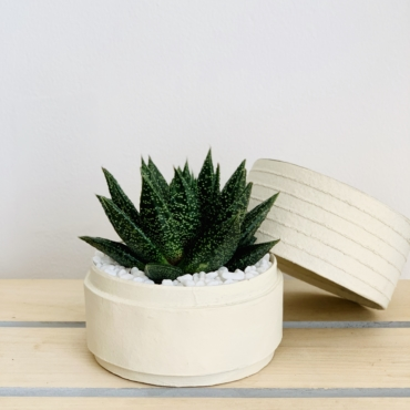 Mini Haworthia in a white handmade pot with the lid on the side. Biodegradable and recycled pot. Long-lasting and sustainable plant gift.
