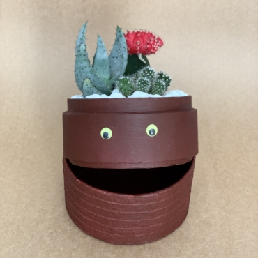 hallowen cacti mix. planted in a burgundy biodegradable pot.