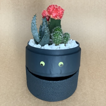 hallowen cacti mix. planted in a charcoal blue biodegradable pot.
