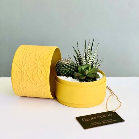 yellow succulent mix