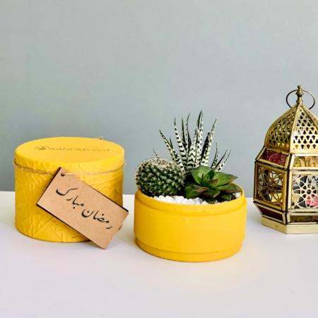 succulent mix yellow box ramadan