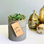 Mini Echeveria in a grey handmade pot, cute and strong succulent with lid. Biodegradable and recycled pot. Long-lasting and memorable sustainable plant gift.