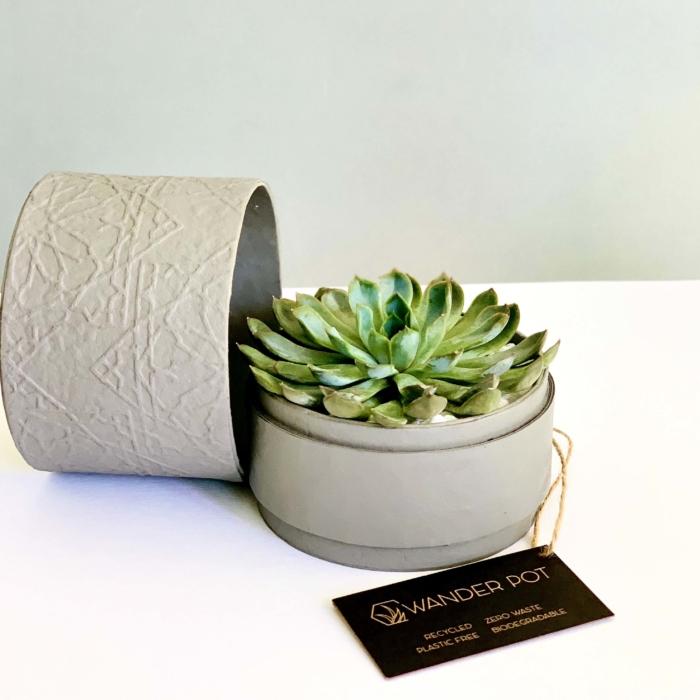 echeveria in a grey box