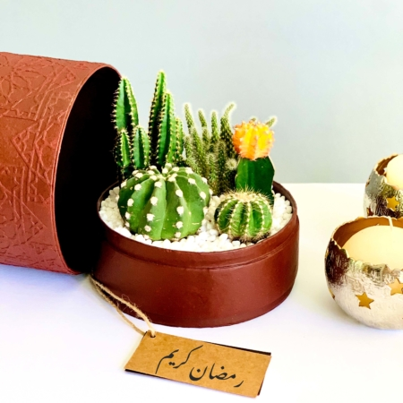 midi burgundi box with cacti mix