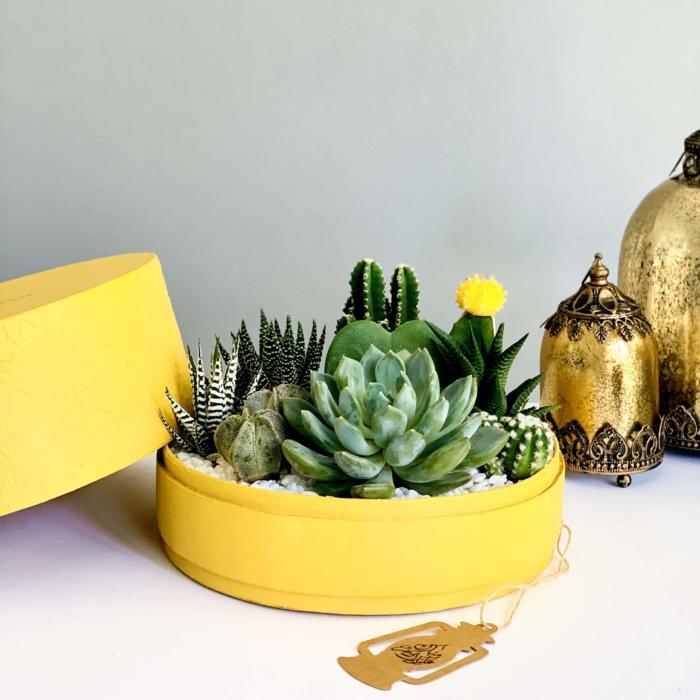lush yellow succulent mix