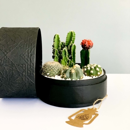 black planter cacti mix