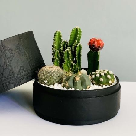 black cacti mix