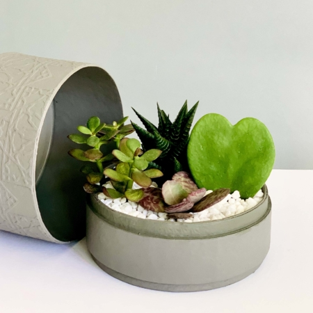 grey midi planter with a succulent mix