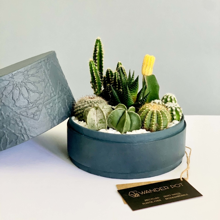 charcoal blue planter with cacti