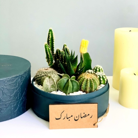 cacti mix in a charcoal blue box ramadan