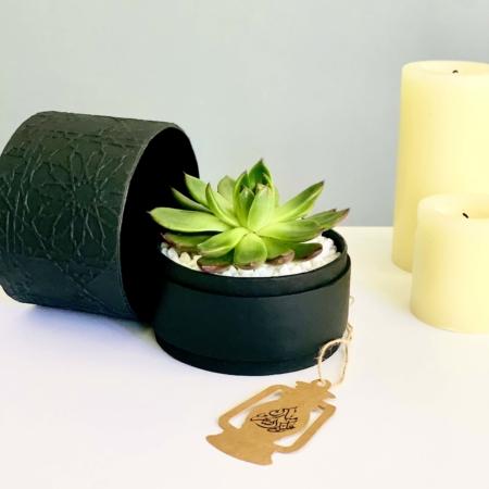 black echeveria in a black pot