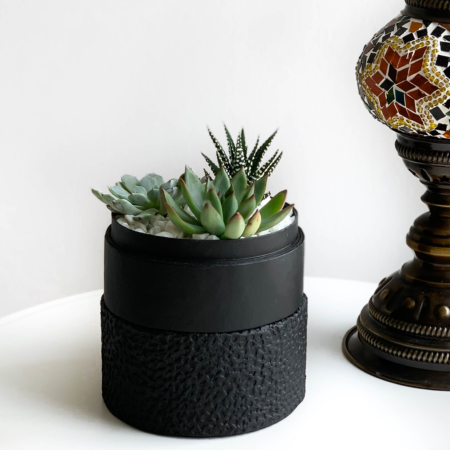 Mini Succulent mix in a black handmade pot, midi jungle cacti mix with centrepiece in background. Biodegradable and recycled pot. Long-lasting and sustainable plant gift.