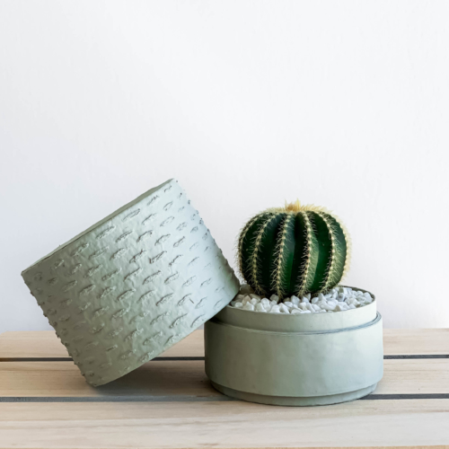 Landscape view of Mini Barrel Cactus in a mint green handmade pot, Thelocactus setispinus with lid. Biodegradable and recycled pot. Long-lasting and memorable sustainable plant gift.