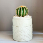 Portrait view of Mini Barrel Cactus in a mint green handmade pot, Thelocactus setispinus with lid. Biodegradable and recycled pot. Long-lasting and memorable sustainable plant gift.