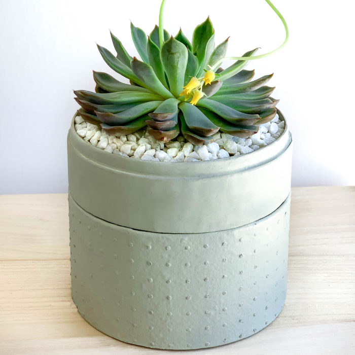 Portrait view of Midi Echeveria in a mint green handmade pot, cute succulent with lid. Biodegradable and recycled pot. Long-lasting and memorable sustainable plant gift.