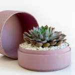 Midi Echeveria in a dust pink handmade pot, cute succulent with lid. Biodegradable and recycled pot. Long-lasting and sustainable plant gift.