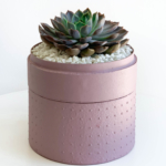 Portrait view of Midi Echeveria in a dust pink handmade pot, cute succulent with lid. Biodegradable and recycled pot. Long-lasting and sustainable plant gift.