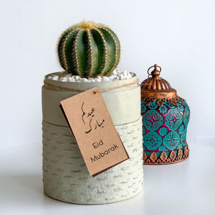 Mini Barrel Cactus in a mint green handmade pot, Thelocactus setispinus with free gift card/personalised message and colourful centrepiece. Biodegradable and recycled pot. Long-lasting and memorable sustainable plant gift.