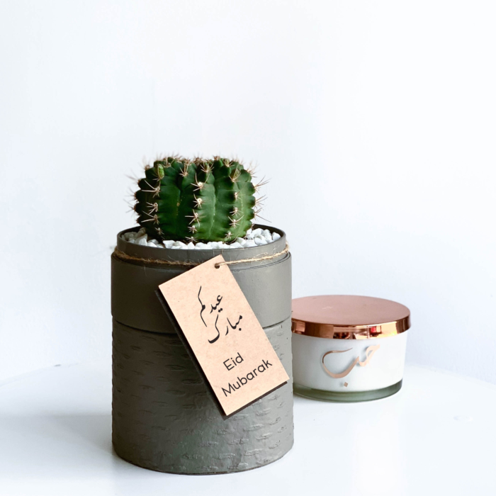 Mini Flowering Chin Cactus in a Grey Handmade pot, Gymnocalycium with personalised gift card and candle in background. Biodegradable and recycled pot. Long-lasting and sustainable plant gift.