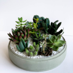 Lush Succulent mix in a mint green handmade pot, cacti mix. Biodegradable and Recycled Pot. Long-lasting and sustainable plant gift.