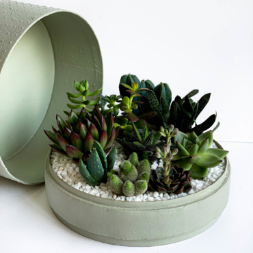 Aerial view of Lush Succulent mix in a mint green handmade pot, cacti mix with lid. Biodegradable and Recycled Pot. Long-lasting and sustainable plant gift.