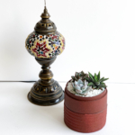 Mini Succulent mix in a red handmade pot, midi jungle cacti mix with centrepiece in the background. Biodegradable and recycled pot. Long-lasting and sustainable plant gift.