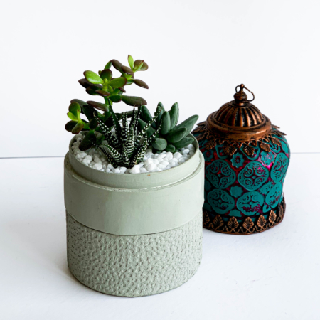 Mini Succulent mix in a mint green handmade pot, midi jungle cacti mix with centrepiece in background. Biodegradable and recycled pot. Long-lasting and sustainable plant gift.