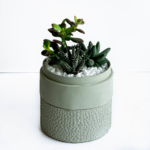 Portrait view of Mini Succulent mix in a mint green handmade pot, midi jungle cacti mix. Biodegradable and recycled pot. Long-lasting and sustainable plant gift.