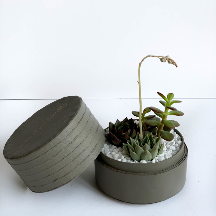 Landscape view of Mini Succulent mix in a grey handmade pot, mini cacti. Biodegradable and recycled pot. Long-lasting and sustainable plant gift.