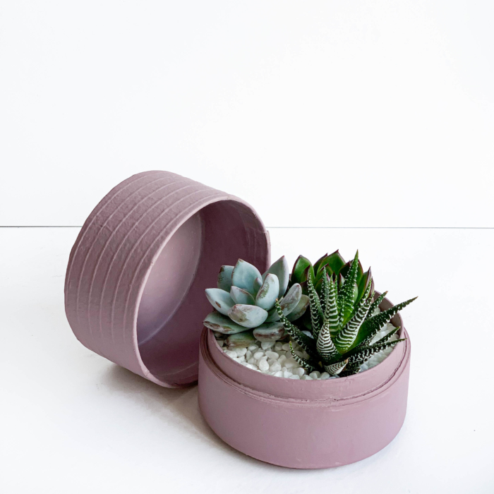Mini Succulent mix in a dust pink handmade pot, midi jungle cacti mix. Biodegradable and recycled pot. Long-lasting and sustainable plant gift.