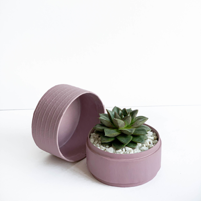 Mini Echeveria in a dust pink handmade pot, cute succulent. Biodegradable and recycled pot. Long-lasting and memorable sustainable plant gift.