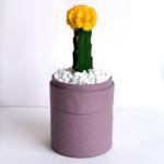 Yellow Ruby Cacti in a dust pink handmade pot, Gymnocalycium mihanovichii with lid. Biodegradable and recycled pot. Long-lasting and sustainable plant gift.