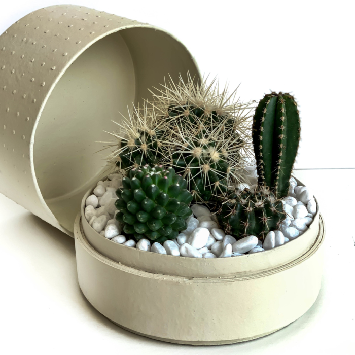 Midi Succulent mix in a warm white handmade pot, midi jungle cacti mix with lid. Biodegradable and recycled pot. Long-lasting and sustainable plant gift.