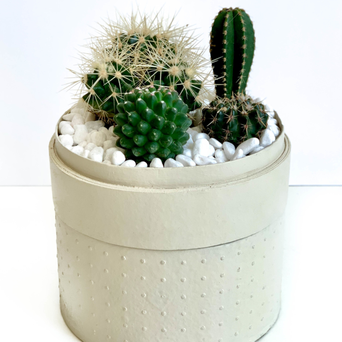 Portrait view of Midi Succulent mix in a warm white handmade pot, midi jungle cacti mix. Biodegradable and recycled pot. Long-lasting and sustainable plant gift.