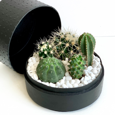 Midi Succulent mix in a black handmade pot, midi jungle cacti mix with lid. Biodegradable and recycled pot. Long-lasting and sustainable plant gift.