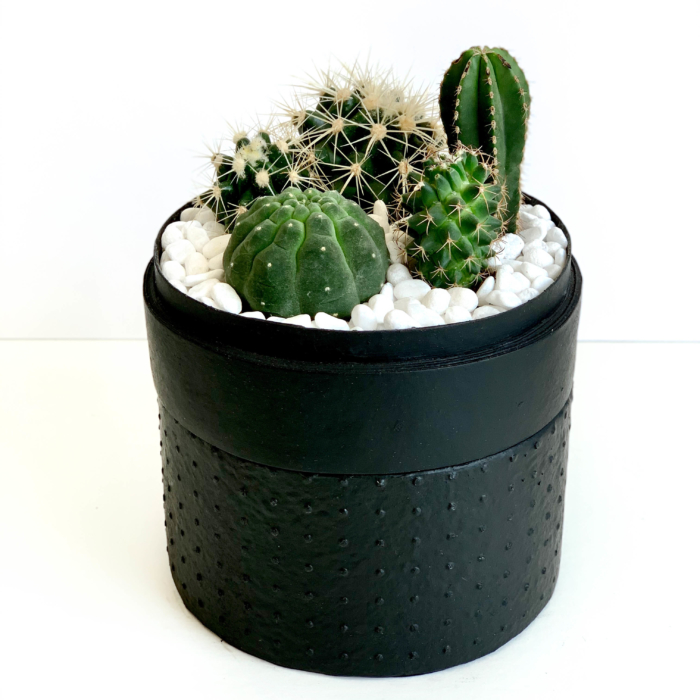 Portrait View of Midi Succulent mix in a black handmade pot, midi jungle cacti mix with lid. Biodegradable and recycled pot. Long-lasting and sustainable plant gift.